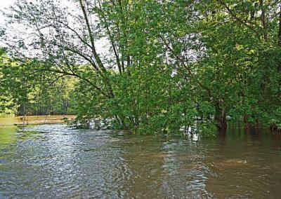 Environmental Ground_UpstreamGrandStBridgeArea_4695
